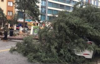 İstanbul'da fırtına ağaç devirdi