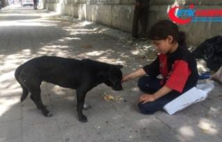 Kağıtçı küçük kız yiyeceğini sokak köpeğiyle...