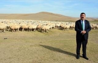 TÜDKİYEB Başkanı Çelik: 2020 küçükbaş hayvancılıkta...