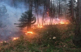 Uludağ'da orman yangını çıktı