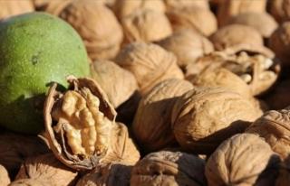 'Ceviz artık bir meyveden çok sağlık için...