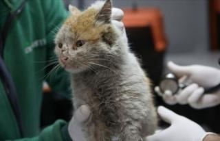 Enkaz altından çıkarılan kedi Antalya'ya...