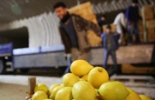 Limon ağacı bulunmayan beldeden yılda 4 milyon...