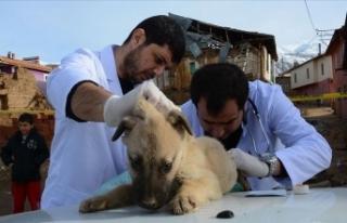 Malatya'da gönüllü veterinerler depremden...