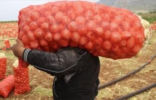 Tarım ve Orman Bakanlığından soğan-patates ihracatına...