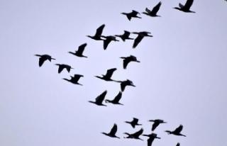 Veterinerlerden 'ölü kuşlara dokunmayın'...