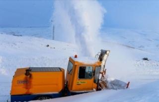 Aras Dağları'nın 'kar kaplanları'...