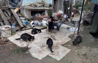 Emekli maaşıyla sokak kedilerini besliyor
