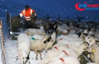 Amasya'da kar nedeniyle yaylada mahsur kalan...