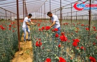 Anneler Günü çiçek üreticisine Kovid-19 sürecinde...