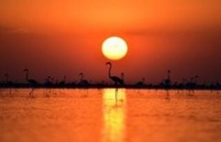 Tuz Gölü Havzası'nda 71 endemik bitki türü...