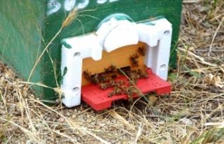 Kırıkkale'de yetiştirilen ana arılar ülke...