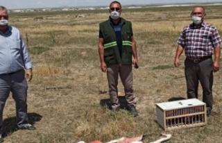 Konya'da suna kuşu ve flamingo katliamına:...