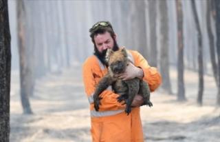 Avustralya'daki yangınlardan yaklaşık 3 milyar...