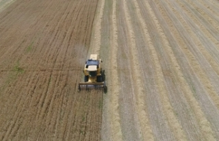 Dolu yağışları buğday ve arpa verimini yarı...