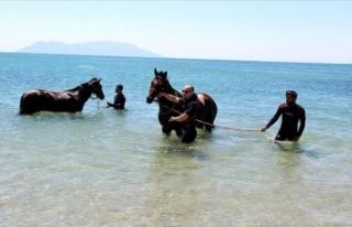 Şampiyon atlar Saros Körfezi'nde 'form'...