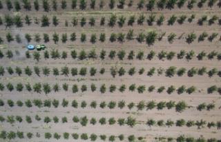 11 milyon metrekare Hazine arazisi ağaçlandırma...