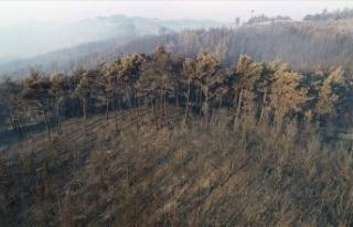 Adana'daki orman yangınına havadan müdahale...