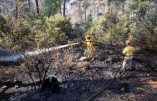 Adana'daki orman yangınında soğutma çalışmaları...