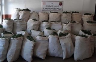 Diyarbakır'da 1 milyon 119 bin kök kenevir...