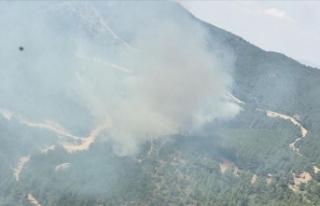 İzmir'de çıkan orman yangınına müdahale...