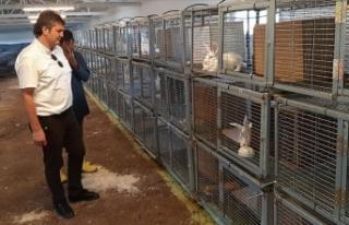 Kocaeli'de tavşan eti üretim çiftliği kuruldu