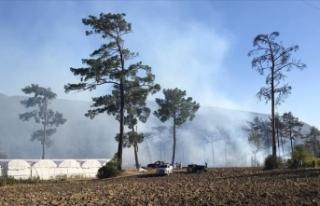 Antalya'da seralara da sıçrayan orman yangınına...