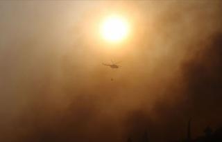 Aydın'ın Söke ilçesindeki orman yangını...