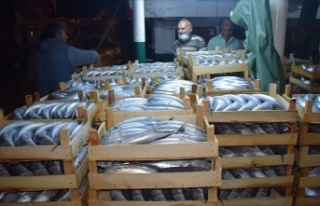 Balıkçılar Akçakoca Limanı'na binlerce palamutla...