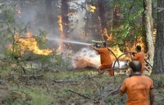 Çorum ile Sinop arasındaki orman yangını büyük...