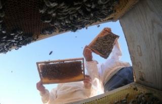 Türkiye'de bal üretimi geçen yıla göre yüzde...