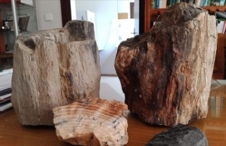 Türkiye'deki fosil ağaç kalıntıları 160...