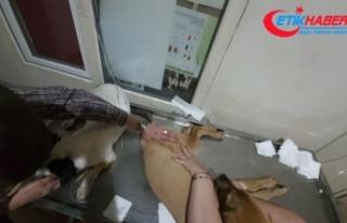 16 köpeği zehirleyerek öldürdüler...2 kişi gözaltında