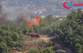 Hatay'daki orman yangınları kontrol altına...