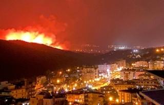 Hatay'da orman yangınları