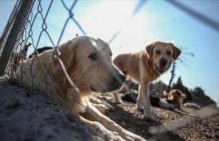'Hayvan hakları konusunda toplumda tasa oluşacak...
