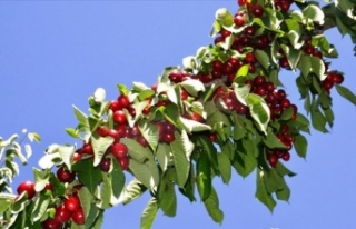 Türkiye'nin yaş meyve ve sebze ihracatında...