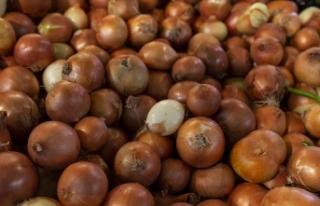 Başkentte soğanların raf ömrünü uzatacak yatırım...