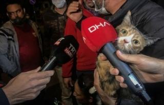 Depremde enkazdan çıkarılan kediler unutulmadı