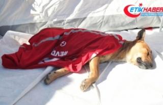 Depremin yorgun kahramanı 'Hassas burun'