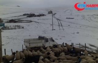 Karagöl Dağı'na mevsimin ilk karı yağdı