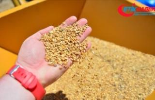 Buğday, arpa ve mısır ithalatında 30 Nisan 2021'e...