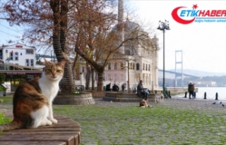 Marmara Bölgesi'nde hafta sonu sıcaklıklar...