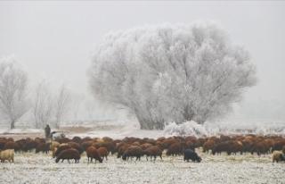 Doğu Anadolu'da dondurucu soğuklar yaşamı...