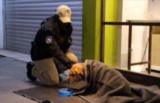 Uşak'ta polis ekipleri bazı sokak hayvanlarını...