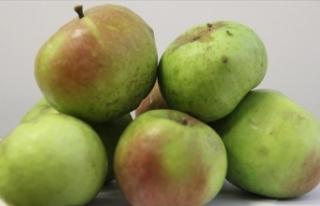 'Yomra elması' coğrafi işaret tescil...