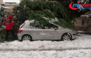 Zonguldak'ta yoğun kar yağışından devrilen...