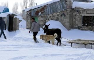 Hayvanları için dondurucu soğukta karlı dağlardan...