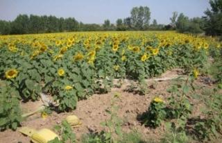 Tarım-ÜFE aylık yüzde 3,03 arttı