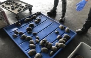 Ekvador'da valizden plastiğe sarılı 185 bebek...